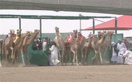 c-camel-race-arab-1