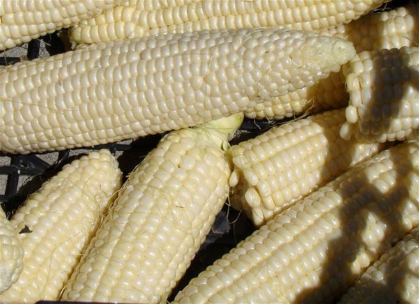 a-corn-bap-maize ngo