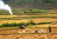 thai-cong-tung
