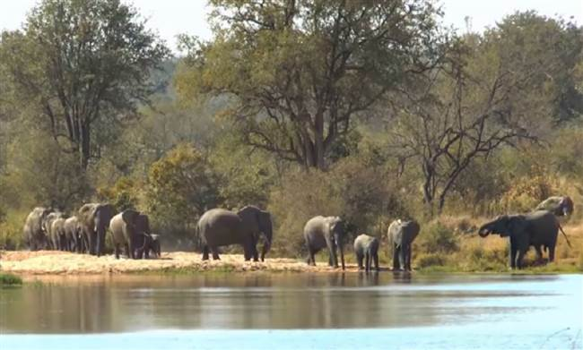 resized-a-elephant-herd-x