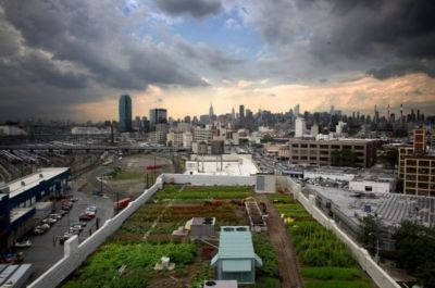 farming_on_top_building_brooklyn-grange-by-cyrus-dowlatshahi-large-content