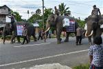 afp-indonesia-elephant-polling