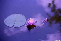 lotus-buddhism-buddhist-meditation-zen