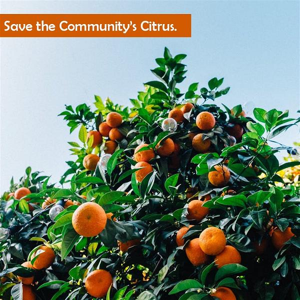 GARDEN GROVE_save-the-JPG-citrus
