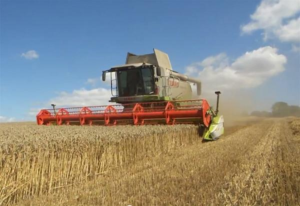 a-wheat-field-harvest-a