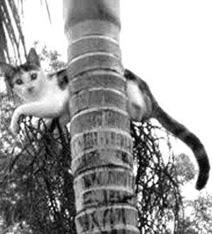 Kết quả hình ảnh cho mèo trèo cây