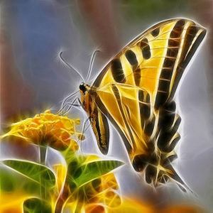 7_electric_butterfly-nag_thanh_lam-large-content