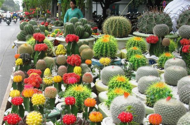resized-a-thai-flower-festival